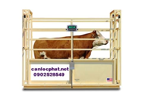 Hình cân điện tử 2tấn cân bò