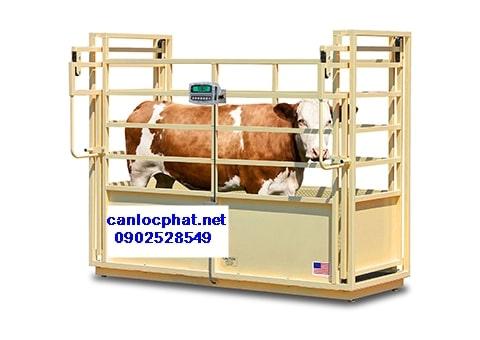 Hình cân điện tử 3tấn cân bò